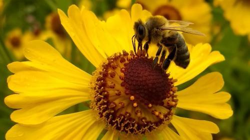 Insectele, ameninţate de extincţie