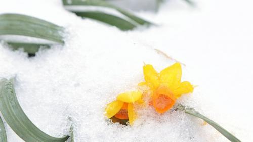 Prognoza METEO pentru perioada 18 februarie - 18 martie 2019. Meteorologii anunță schimbări dramatice