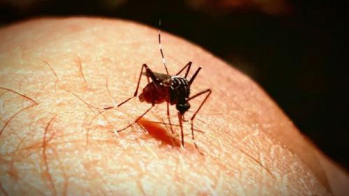 Modalitate absolut naturală pentru a scăpa definitiv de ţânţari