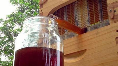 STUPUL care extrage mierea automat (vezi VIDEO)