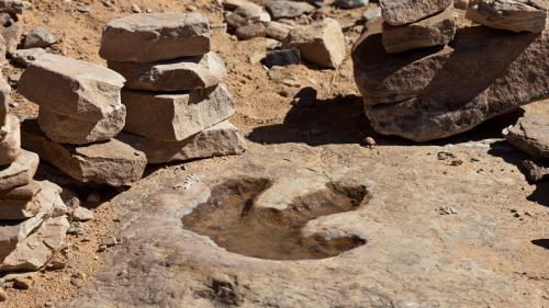 Argentina: A fost descoperită fosila unei noi specii de dinozaur ornitopod
