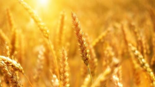 MADR: România a crescut exportul de cereale în UE şi țări terţe