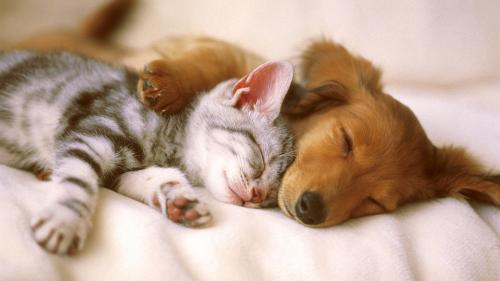 Preferinţa pentru câini ca animale de companie ar putea fi influenţată de ADN