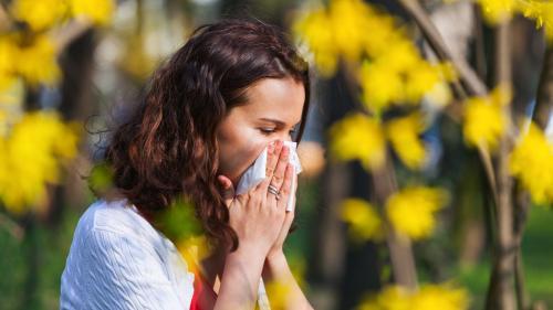 Ce plante provoacă alergii