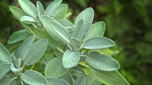 Plantele care te scapă de energiile negative