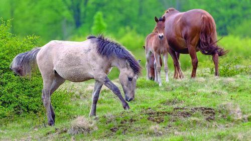 Caii dacilor umblă liberi la Anina