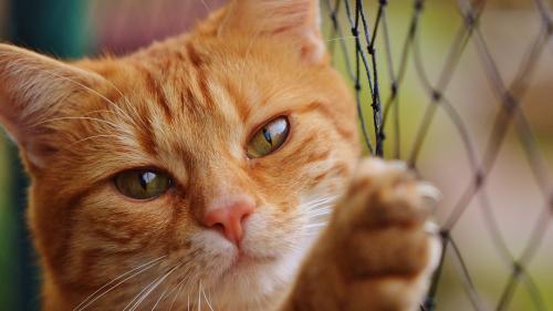 """Stereotipul """"femeii nebune cu multe pisici"""" nu este susţinut de dovezi ştiinţifice"""