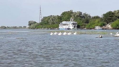 Tulcea: Accesul turiştilor, interzis pe insula K din Golful Musura