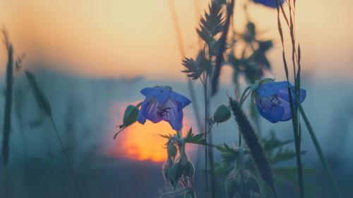 Horoscop zilnic, 24 august. Berbecii sunt sensibili la poveștile celor din jur