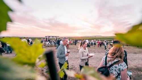 MAUVE Wine Experience III - Festival de muzică și film în via Tohani România