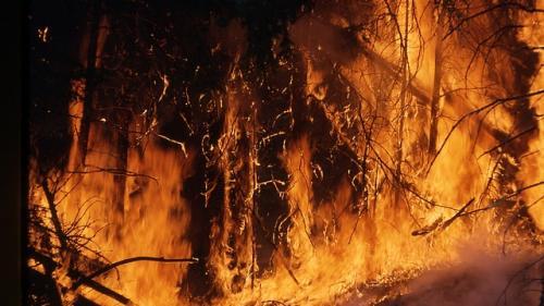 Incendiu de proporții în Dolj ! Au ars 50 de hectare de pomi fructiferi