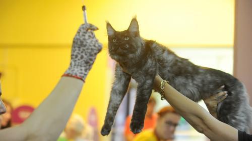 SofistiCAT toamna 2019. Concursul celor mai frumoase pisici (GALERIE FOTO)