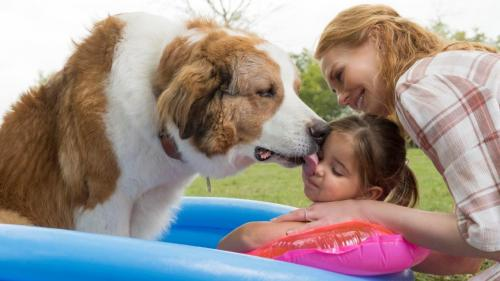Cum alegem câinele de companie? 4 lucruri la care e bine să fim atenți