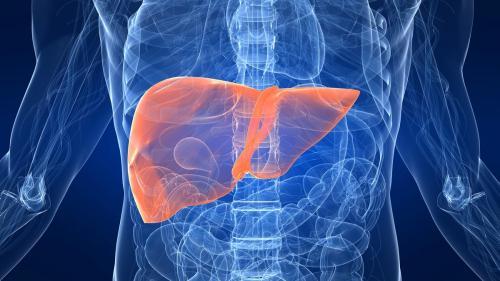 Ficatul ciroticului are multă fibroză, care împiedică sângele să curgă