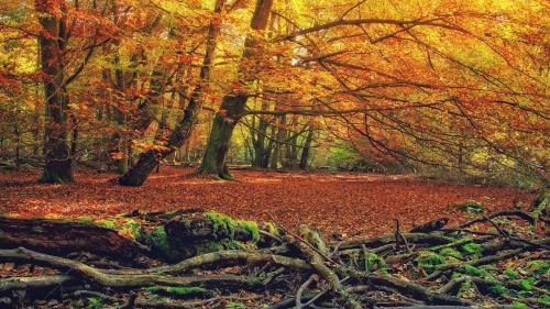 Prognoza METEO pentru 18, 19, 20 şi 21 octombrie: Cer senin