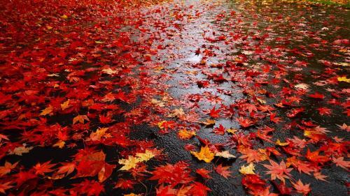 Prognoza METEO pentru 21 octombrie - 18 noiembrie. Vremea se răcește. Revin ploile la mijlocul lunii noiembrie