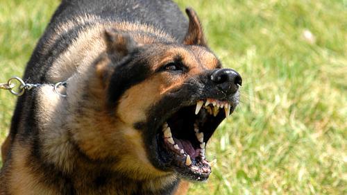 Tragedie la vânătoare. O femeie însărcinată a fost ucisă de câini într-o pădure din nordul Franței