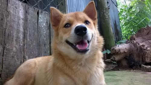 Anii câineşti reprezintă un mit, iar câinii de doi ani sunt animale de vârstă mijlocie