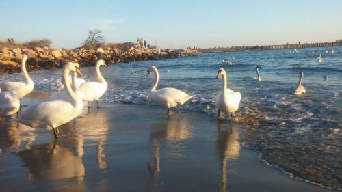 Excursii pe malul Mării Negre