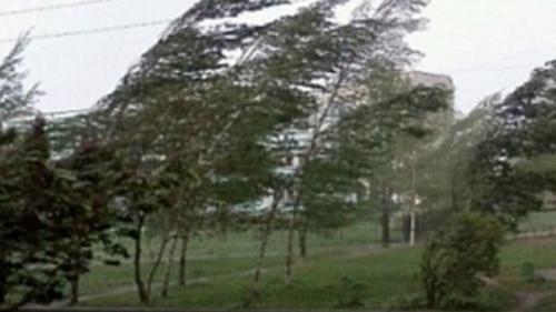 Vânt puternic în Prahova. Copac căzut pe carosabil, un acoperiș smuls și locuințe fără curent
