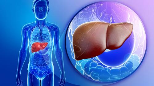 Fumatul împuţinează legăturile de energie din ficat