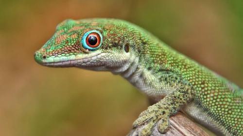 Încălzirea globală reduce speranța de viață a reptilelor și amfibienilor