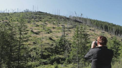 """""""Lemn""""/""""Wood"""", filmul care vorbește despre tăierile ilegale de păduri din România, va avea premiera la Festivalul Internațional de Film Documentar Copenhaga"""