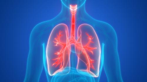 Coronavirusul irită alveola şi schimbul între aer şi sânge este îngreunat în plămâni