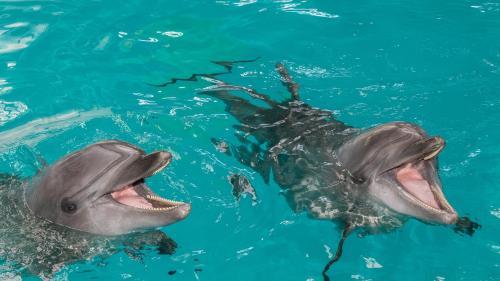 Delfinariul din Constanța transmite online reprezentațiile delfinilor NI-NI și CHAN-CHAN