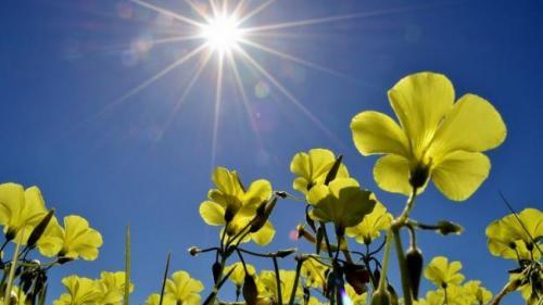 Razele soarelui distrug rapid coronavirusul, potrivit cercetătorilor din SUA