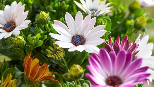 11 Sfaturi de organizare pentru grădinarii începător