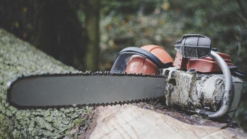 Proiect legislativ care prevede amenzi sau închisoare pentru furtul de arbori sau puieți din pădure, adoptat de Senat