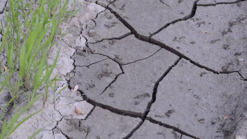 Seceta a afectat 1,1 milioane ha de culturi de toamnă și peste 34.000 de fermieri