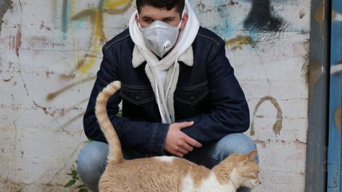 Studiu: Coronavirusul se poate transmite de la oameni la pisici și câini