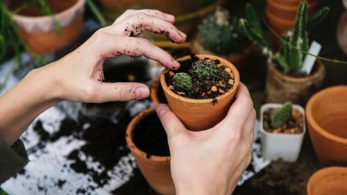 Soluţia naturală care îţi va readuce la viaţă plantele din casă