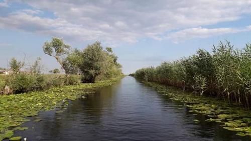 Izolare, în Pădurea Letea, din Delta Dunării