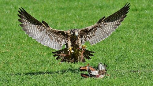 Legea vânătorii ameninţă păsările protejate