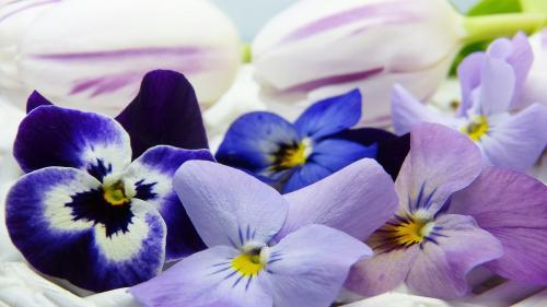 Terapia florală, un ajutor în perioadele de stres