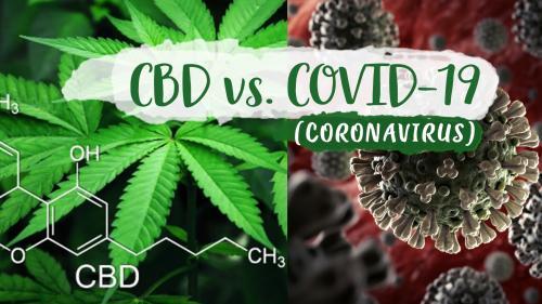 Ar putea formula de terpene de canabis să trateze COVID-19?