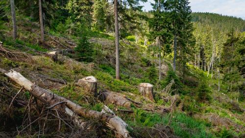 Monitorul pădurilor, în faza de testări
