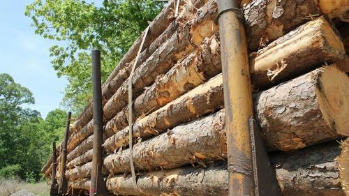 """Uniunea Europeană intră în """"epoca lemnului"""""""