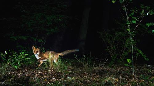 Camere de vânătoare şi instrumente de monitorizare Night Vision, echipamente profesionale pentru cei ce iubesc natura