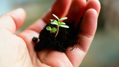 Ce plante putem sădi în februarie