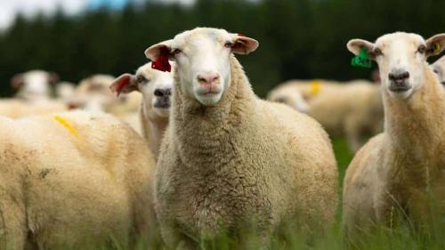 Ce reguli trebuie respectate atunci cand transporti animale vii?