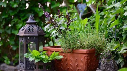 Tips & tricks: Plasarea și îngrijirea terariilor cu plante pe balcon