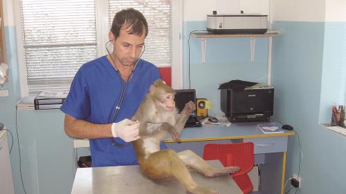 (P) Animalele de companie, răsfățate și tratate cu cea mai performantă tehnologie și multă dragoste
