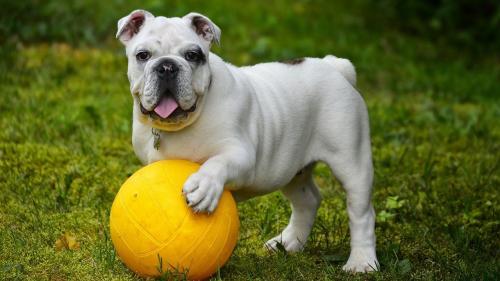 2 paraziți pe care câinele tău îi poate lua din iarbă și cum îl ferești