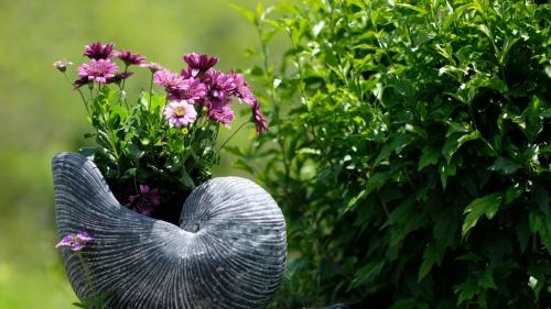 Patru trucuri pentru plante mai sănătoase