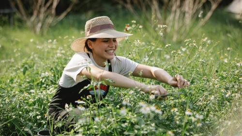 Cum să îți aranjezi singur grădina: sfaturi utile