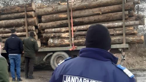 Proiect de lege. Jandarmeria ar putea confisca vehiculele care transportă lemn tăiat ilegal